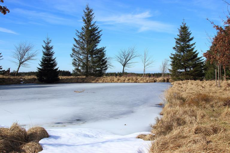 lake frozen landscape venn belgium moor nature nature reserve swamp meadow grass reed
