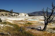 yellowstone-national-park-wyoming-207599.jpg